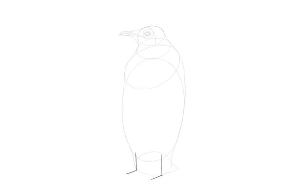 sketch legs structure