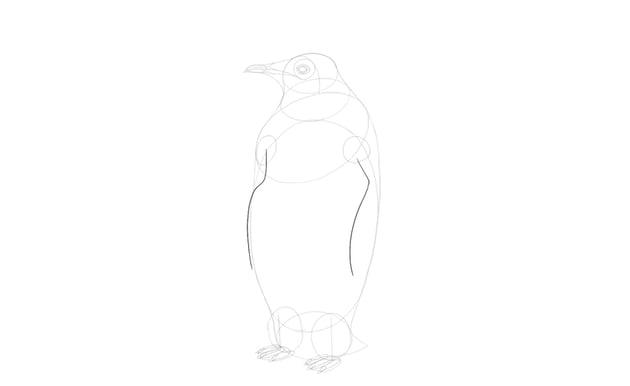 sketch penguin wings