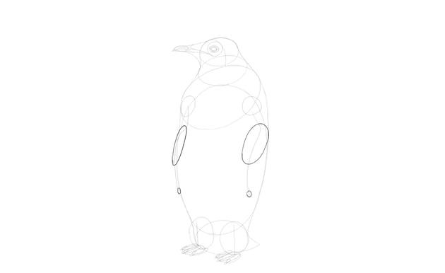 sketch shape of penguin wings