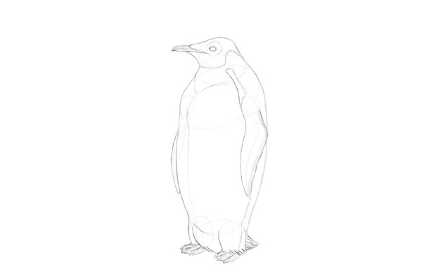 add detail to penguin body