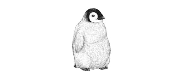 finish baby penguin drawing