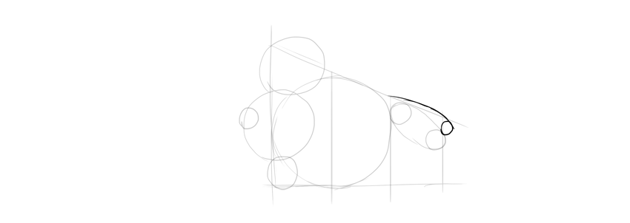 draw sacrum