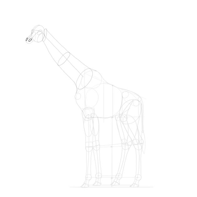 add giraffe nostrils
