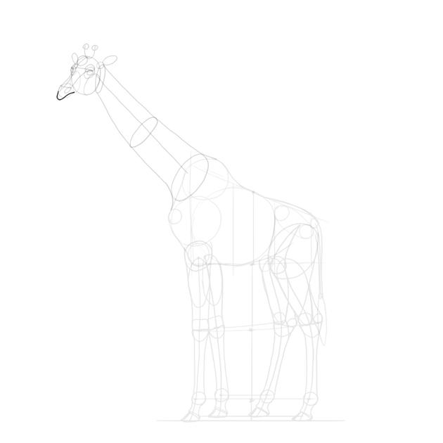 draw giraffe upper lip
