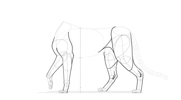 outline whole legs