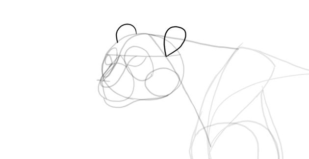 draw ears