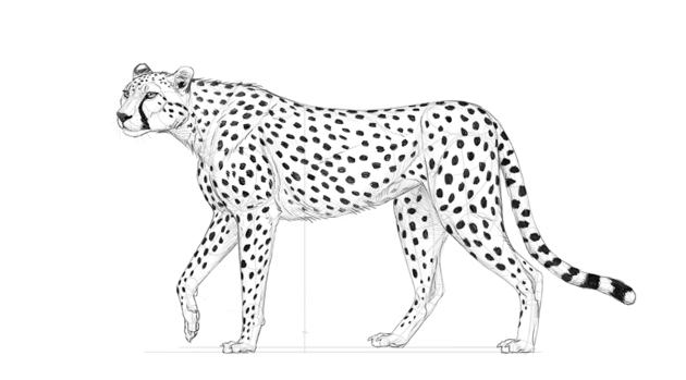 darken cheetah spots