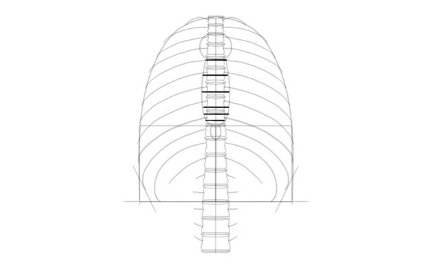 divide sternum into parts