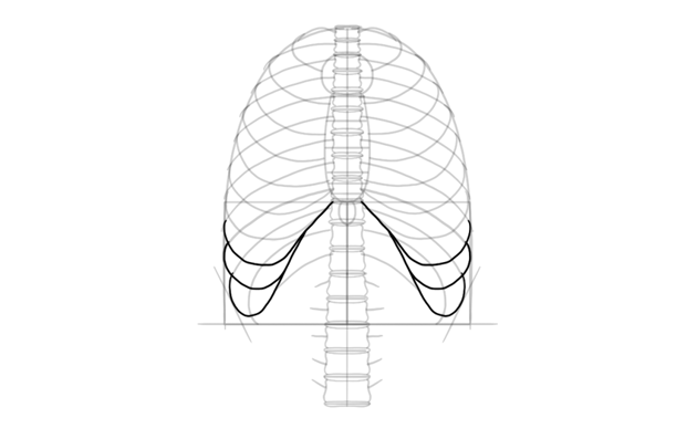 draw ribs connected to seventh rib