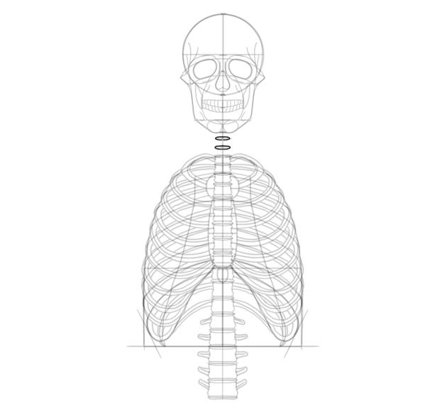 draw neck discs