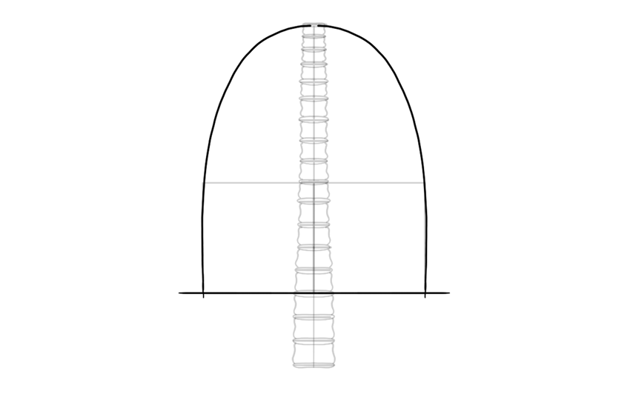 draw shape of ribcage