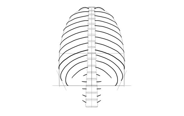 draw shape of ribs