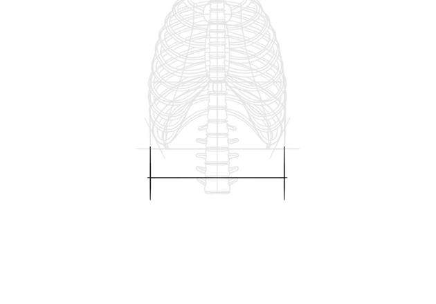 waist length in skeleton