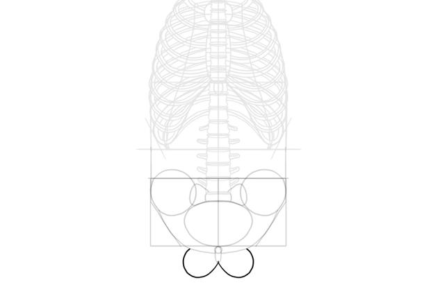 simple ischium shape