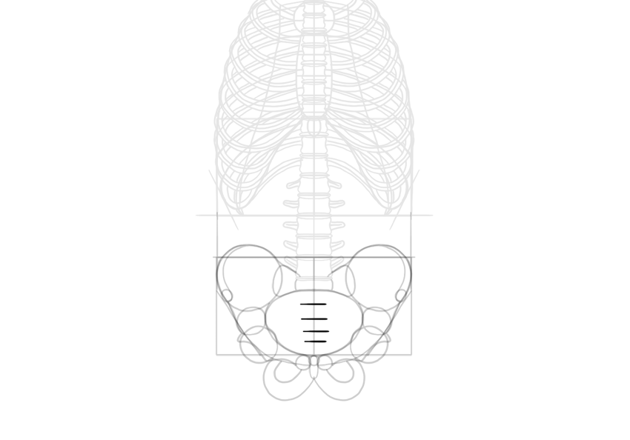 sections of sacrum
