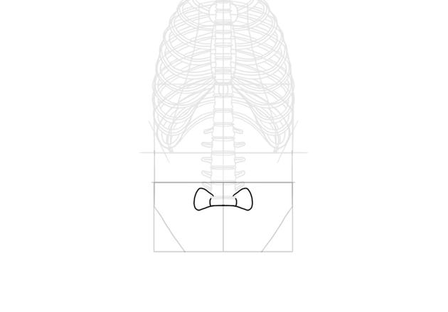 first lumbar vertebra
