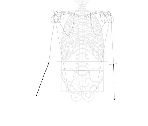 length of forearm bones