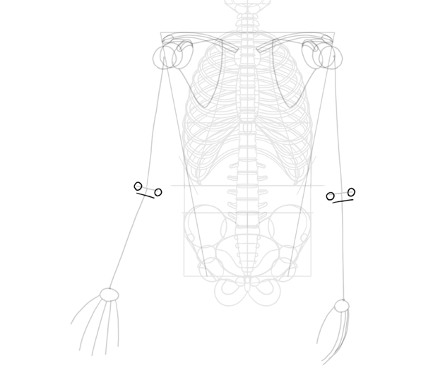 simplified humerus details