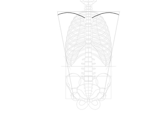basic shape of clavicles
