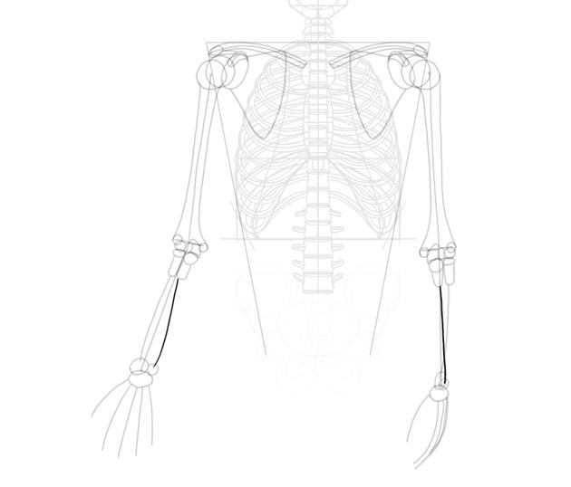 ulna length