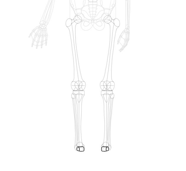 more ankle bones