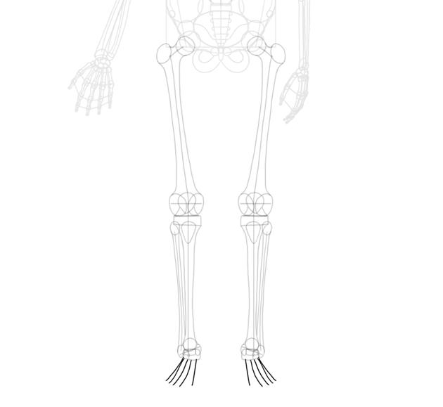toes full length