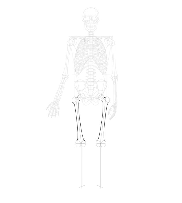 femur outlined