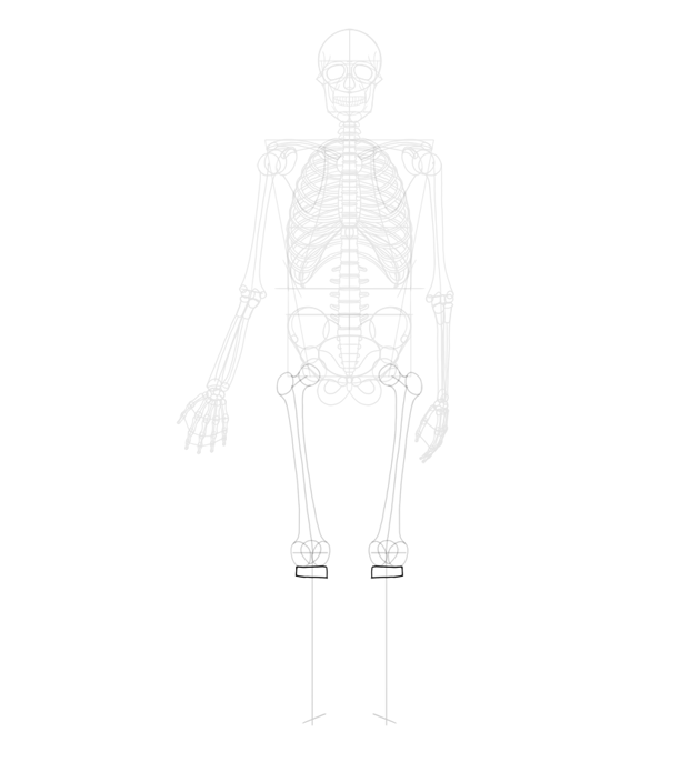 simplfied shape of tibia