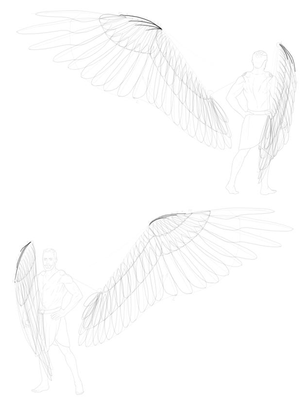alula feathers