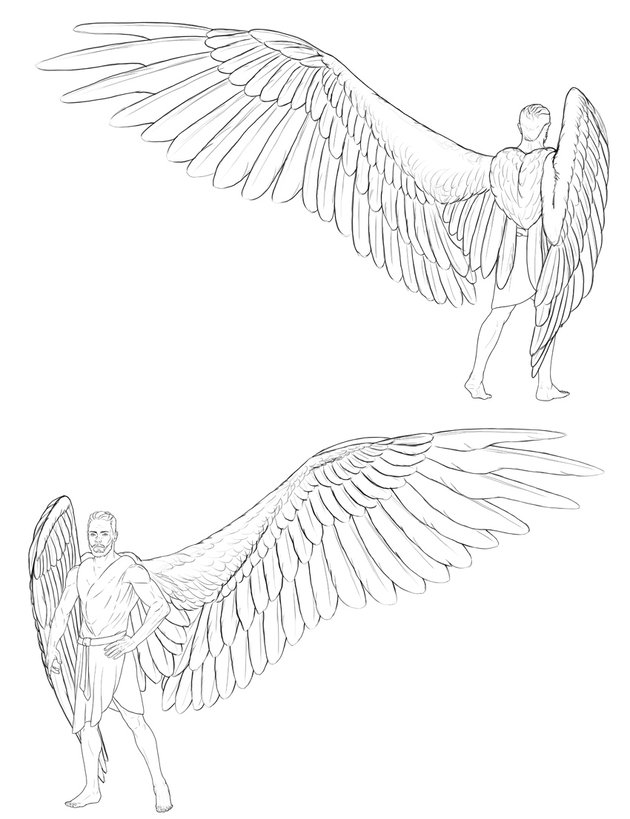 outline the feathers