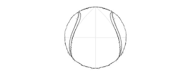 draw a tennis ball