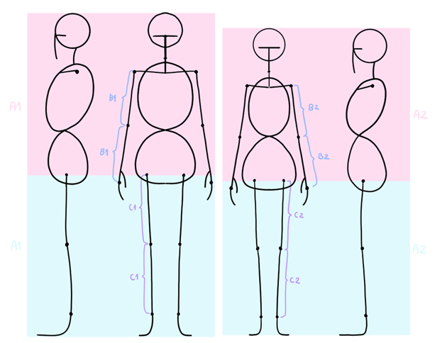 anime body proportions
