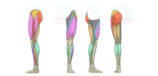 legs anatomy diagram