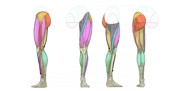 back of leg muscles