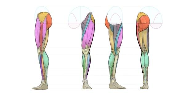 leg muscles side