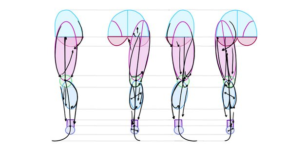 leg anatomy reference