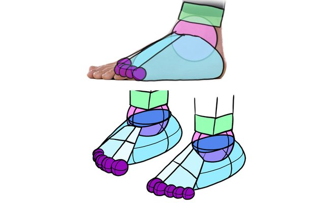 what shape feet have