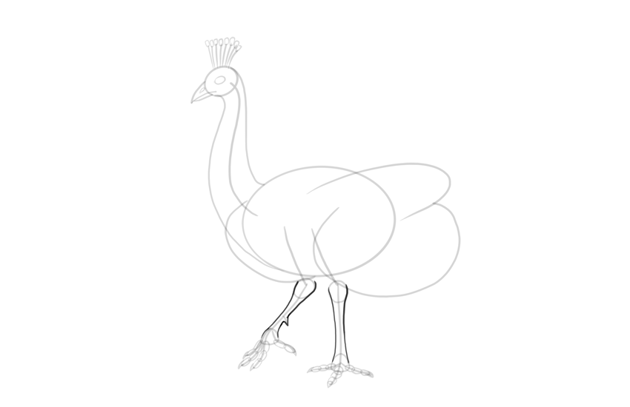 peacock legs detailed