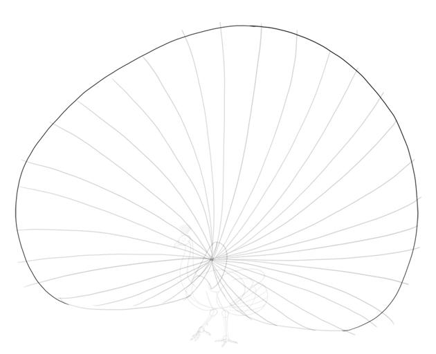 peacock tail fan shape