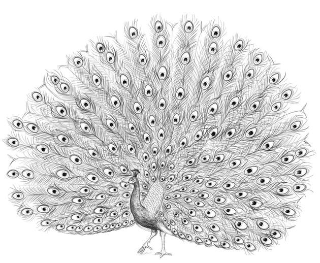 peacock final fixes