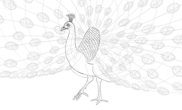 peacock leg scales