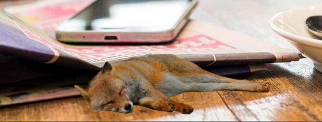 shadows on the fox