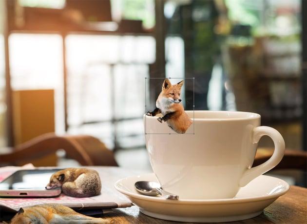 add third fox