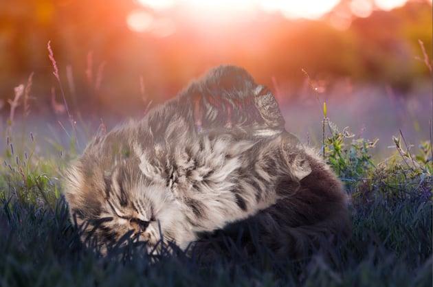 add kitten photo