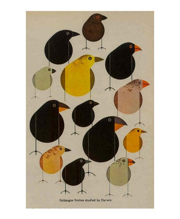 charley harper birds