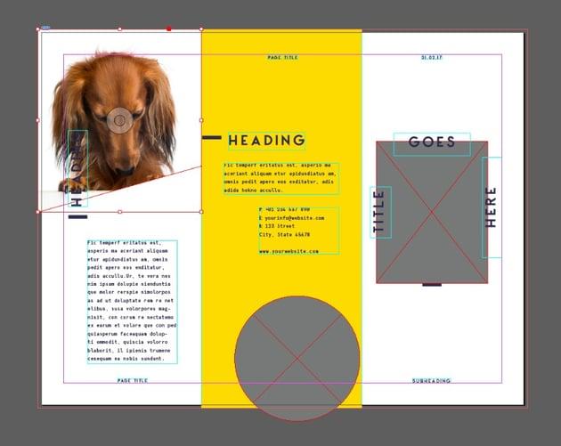 placed dog image
