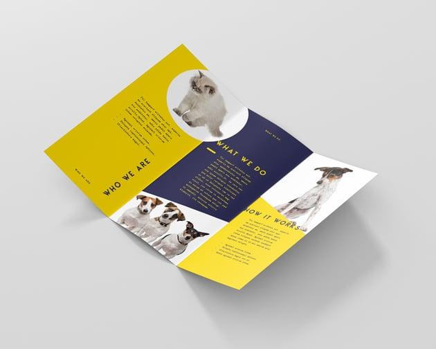 final flyer brochure