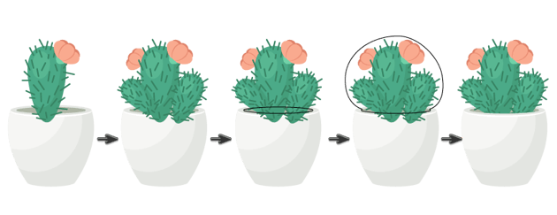 placing cactus leaves in the flower pot