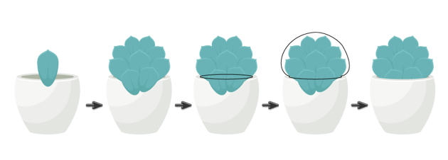 placing Echeveria leaves in the flower pot