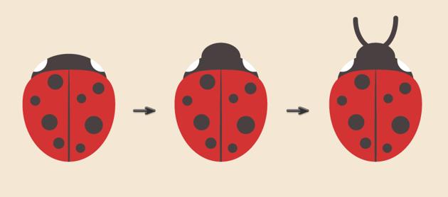 creating the ladybug head and antennas